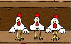 chickens roosting waiting for a rooster