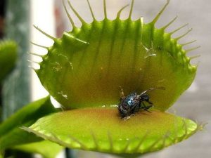 venus flytrap and the law of attraction