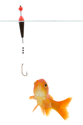 Catch the right fish using the right bait